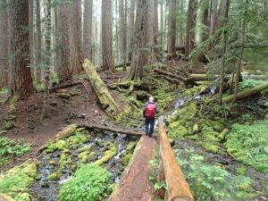 Hiking in the lush Sol Duc River Valley